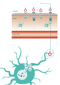 senzagen cell Dendritic cell
