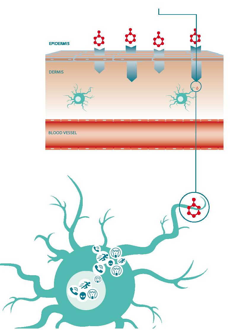 senzagen cell Dendritic cell